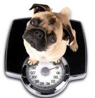 De-Friend your Scale and Boost your Metabolism